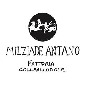 FATTORIA COLLEALLODOLE – MILZIADE ANTANO
